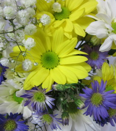 """""""A Daisy a Day"""" Cut Flowers"""