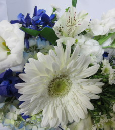 """Blue Horizon"" Cut Flowers"